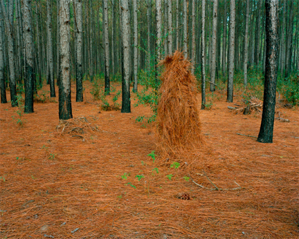 Jeremy Chandler, Ghillie Suit Pine Straw, 2011